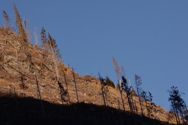 Pokret protiv deforestacije: borba za javni interes između dvije vatre