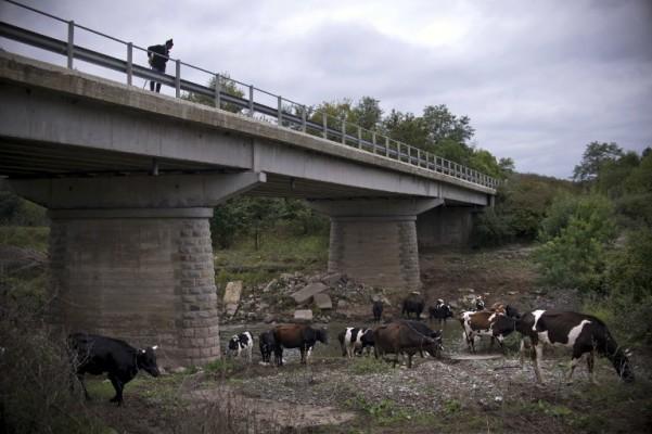 Bugarski mljekari u geopolitičkom vrtlogu?