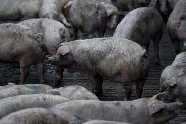 """""""Političko veganstvo"""": društvene i ekološke posljedice napuštanja hrane životinjskog porijekla"""