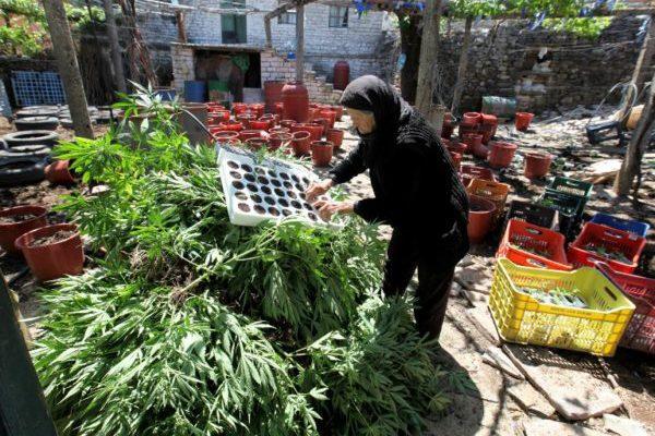 Siva zona: uloga kanabisa u albanskoj ekonomiji