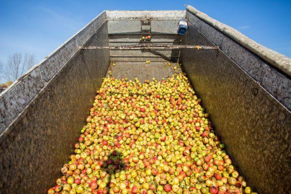 Rumunjska poljoprivreda: društvena važnost, ekonomska beznačajnost