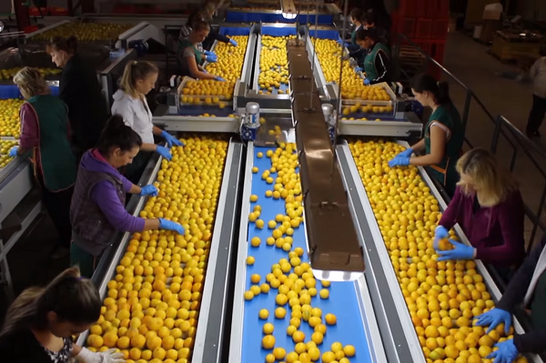 Dolina Neretve: problem razdružene poljoprivrede
