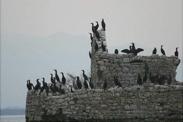 """""""Ekološka država"""" Crna Gora"""