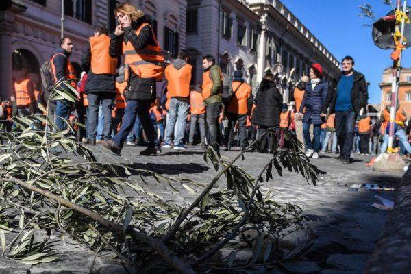 Zbog klimatskih promjena Italija ostaje bez maslinovog ulja