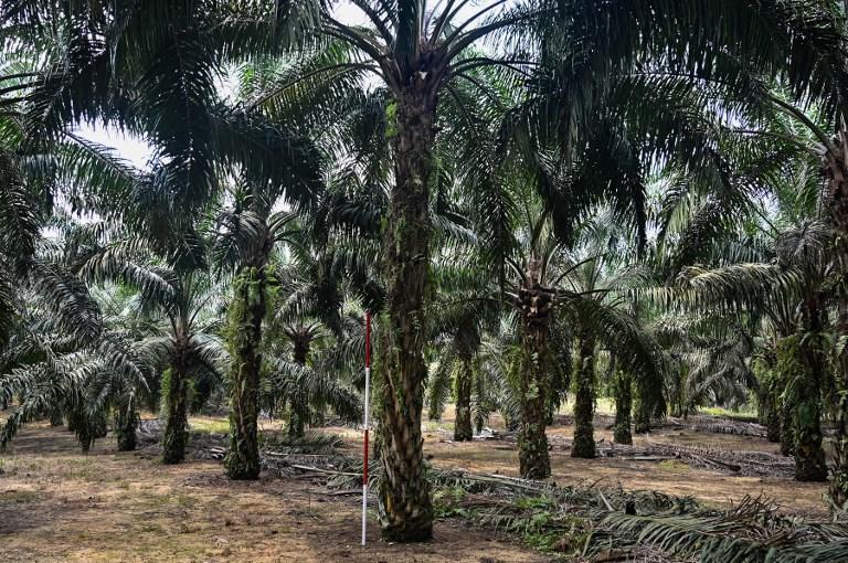 Pad bioraznolikosti ugrožava sigurnost prehrane