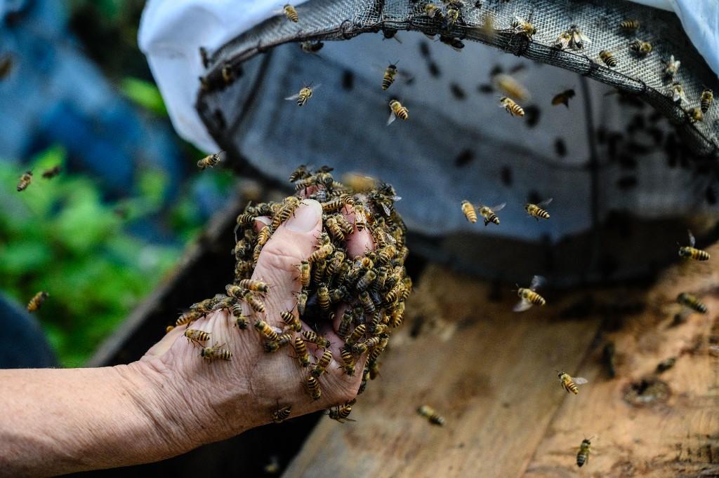 Uspjeh pesticida u ratu protiv pčela