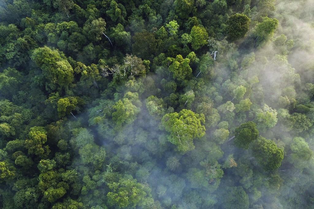 Sadnja stabala za borbu protiv globalnog zatopljenja: da ili ne?