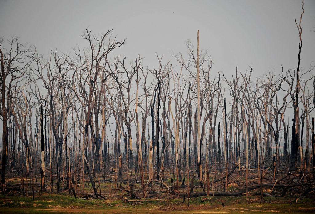 Jesmo li svi jednaki pred zakonom ili zašto gori Amazona?