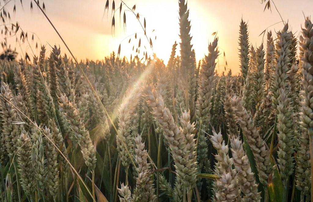 """Dan planete Zemlje: pripremite se na glad """"biblijskih proporcija"""""""