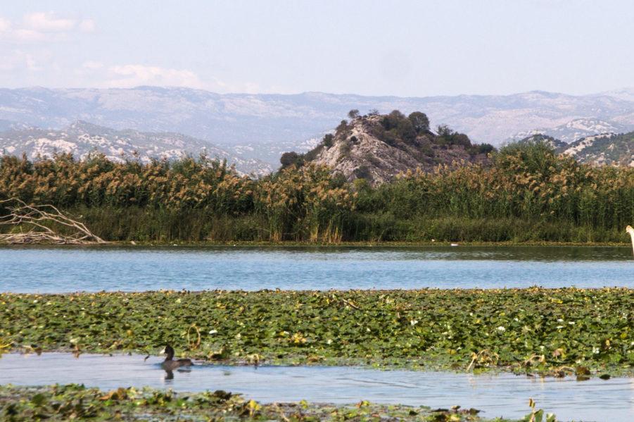 Eko kriminal na Skadarskom jezeru