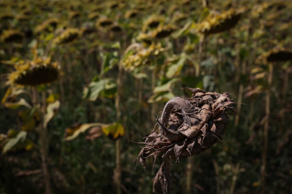 Kad usjevi utihnu: dezertifikacija Rumunjske