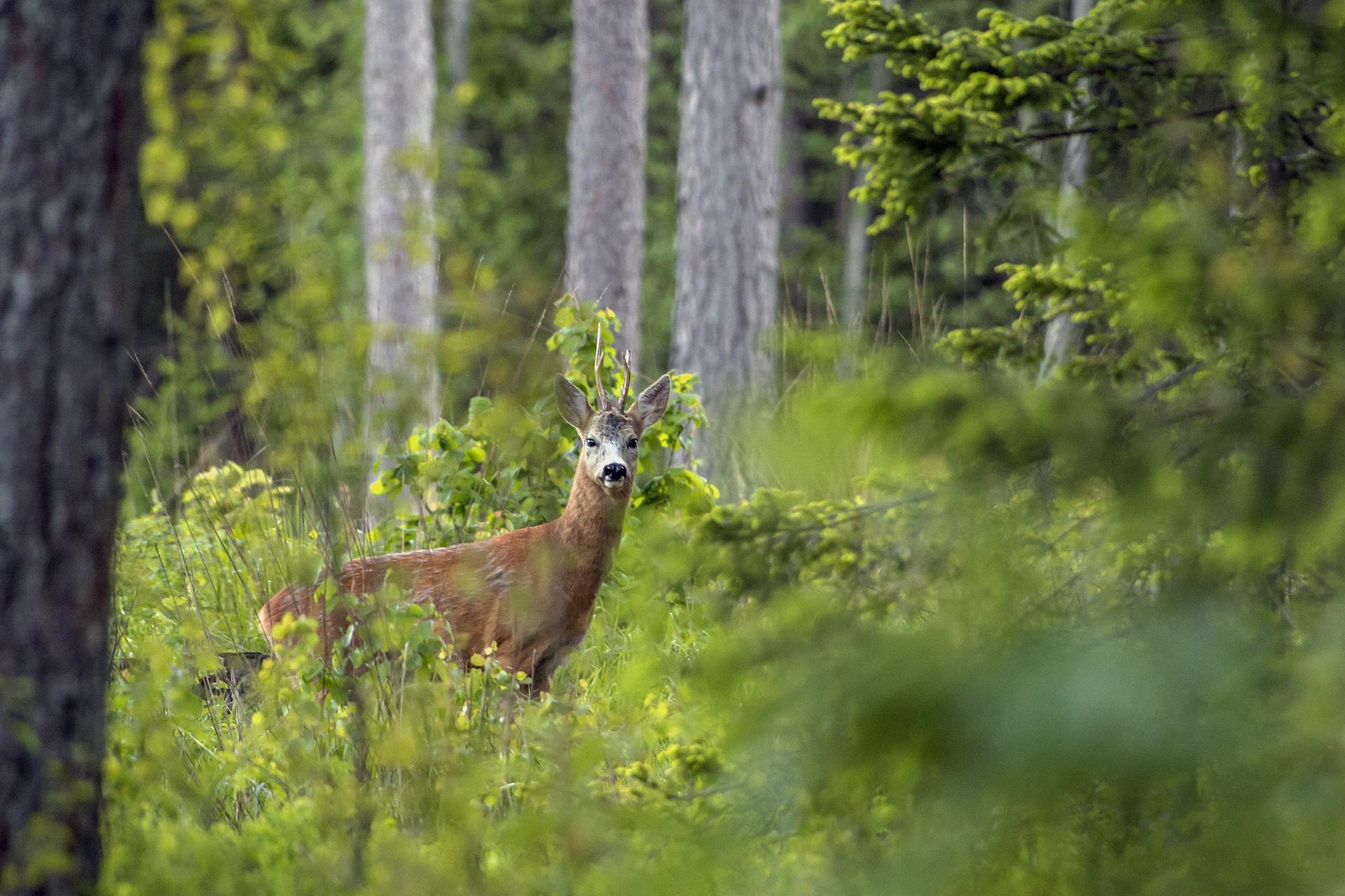 Haajna: Rat za šumu
