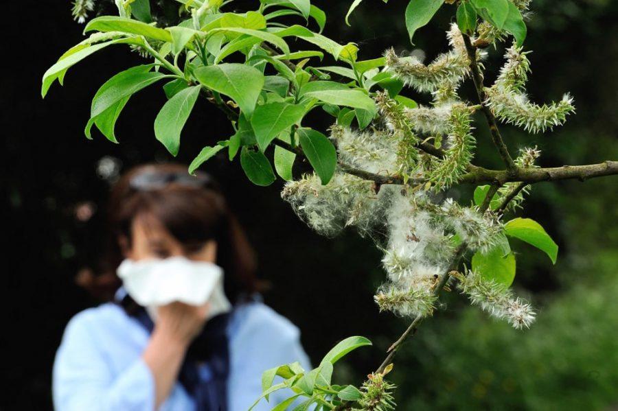 Alergije na pogon klimatskih promjena