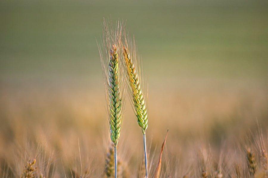 Novi čavao u lijesu domaće poljoprivrede