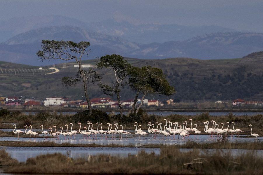 Slučaj flamingos
