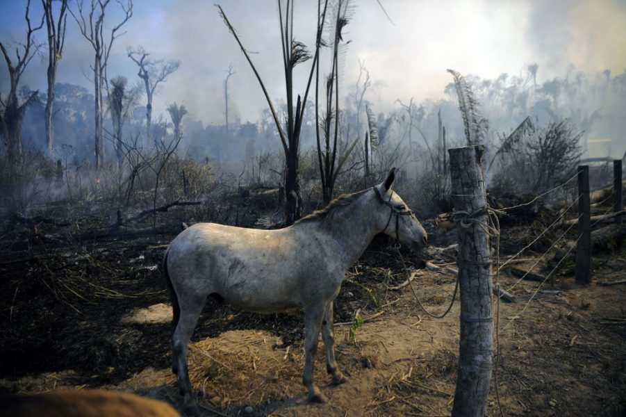 Ostvareno još jedno predviđanje znanstvenika: Amazona postaje ugljično pozitivna