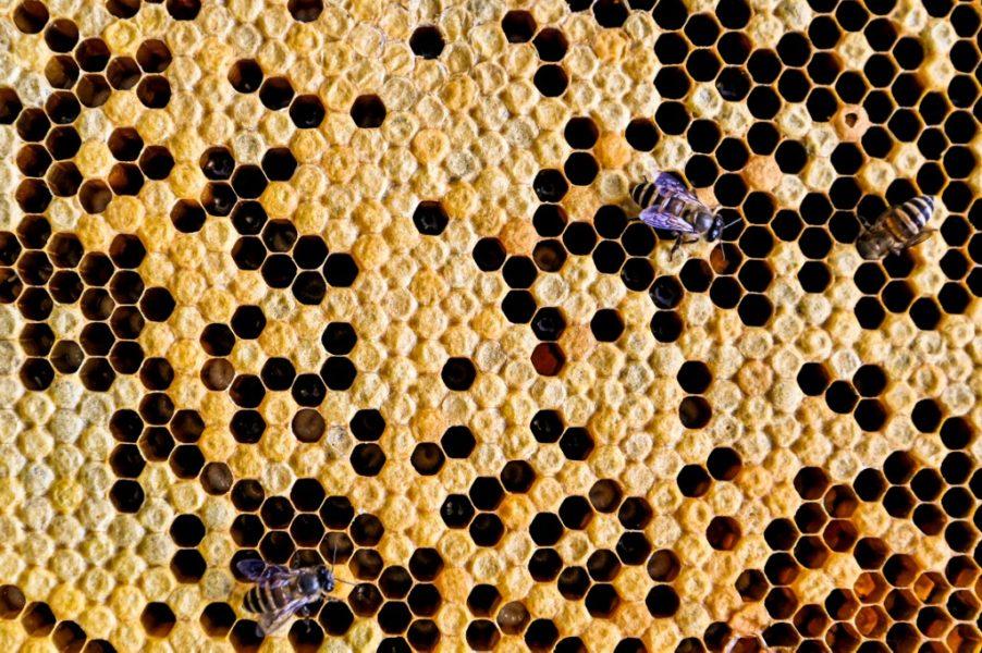 Početak zaštite pčela