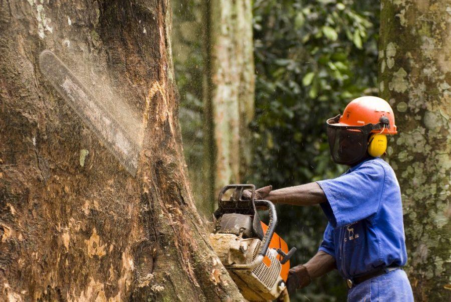 Friziranje šuma