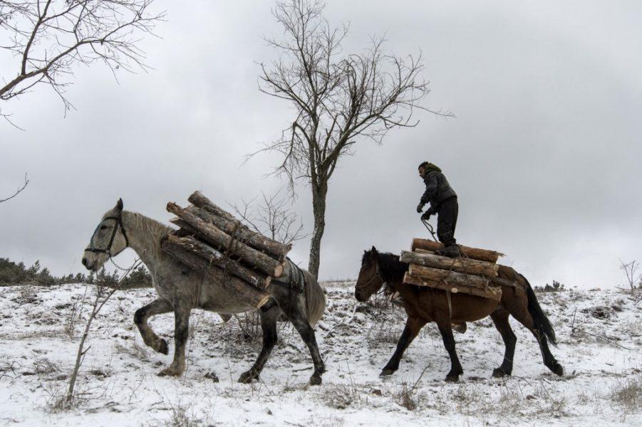 Zanemarivanjem do europskog prvaka u očuvanju šuma